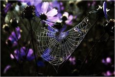 Cobweb in cosmos by Stephen Pryke Kwazulu Natal, Types Of Photography, Windmill, Professional Photographer, Rock Art, Tangled, Cosmos, Weave, San