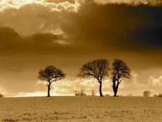 ΟΙ ΑΓΓΕΛΟΙ ΤΟΥ ΦΩΤΟΣ: Τα Τρια Δεντρα