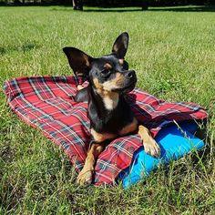 hot hot summer #perropaolo #hund #dog #abkühlung #hotsummer #hotinhere #chillen #intothesun #sunisshining #kaltvonunten