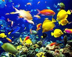 peces-colores-mar[1].jpg (1280×1024)