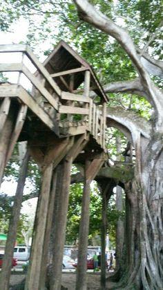 Puerto Rico lo tiene todo: La casa de árbol en Aguadilla, Puerto Rico