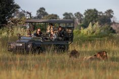 The wildlife experience at the Chitabe camps in the Okavango delta is unsurpassed