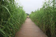 Shanghai Houtan Park by Turenscape « Landscape Architecture Works | Landezine