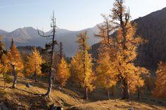 Herbst Wanderurlaub in Kärnten - Sporthotel Frühauf in Kärnten - Österreich Mountains, Nature, Travel, National Forest, Autumn, Naturaleza, Viajes, Destinations, Traveling