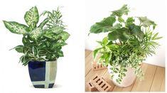 観葉植物 寄せ植え