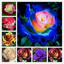 Best value rose seeds – Great deals on rose seeds from global rose seeds sellers | Ranking Keywords on AliExpress Bonsai Plants, Bonsai Garden, Cheap Landscaping Ideas, Rainbow Roses, Hibiscus, Incense, Wedding Events, Seeds, Home And Garden