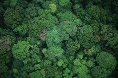 Life on the edge: Saving the world's hotbeds of evolution It's a radical new approach to saving nature: don't obsess about individual species, safeguard the places on the bleeding edge of evolutionary change instead.