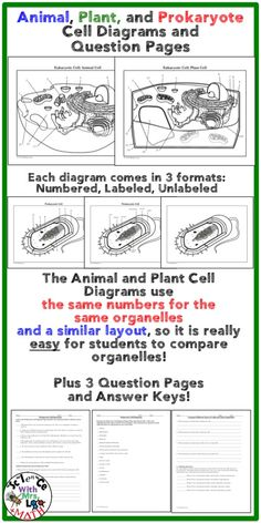 Cells plant and animal cells plant cell activities and plants animal plant prokaryote cell coloring diagram and question pages ccuart Gallery