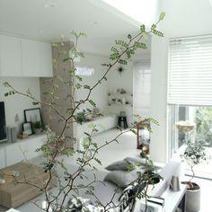 mi-さんの、Lounge,観葉植物,グリーン,アクセントクロス,モノトーン,グレーについての部屋写真
