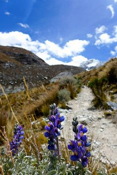 Laguna 69 trail, Huaraz, Peru. Photo (cc) Madeleine Holland. This world is really awesome. The woman who make our chocolate think you're awesome, too. Please consider ordering some Peruvian Chocolate today! Fast shipping! http://www.amazon.com/gp/product/B00725K254