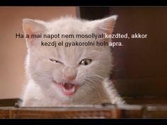 Google+ Jena, About Me Blog, Buddha, Cats, Google, Gatos, Cat, Kitty, Kitty Cats
