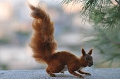 Needle Felted Wool Red squirrel Soft sculpture