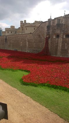 Tower of London - poppies