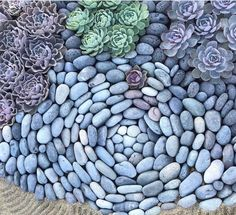 Beautiful rock pattern with succulents