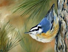nuthatch - one of my favorite birds