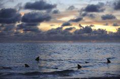 ©Thomas P. Peschak -  Lost World of Aldabra - southern Seychelles