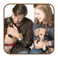 Dachshund Clothing & Clothes, Dachshund Harnesses & Accessories - Noodle and Friends