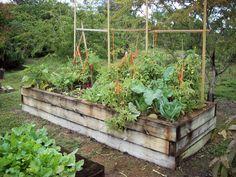 RFVC 031 | Raised vegetable beds | I likE plants! | Flickr