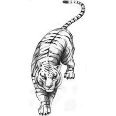 White Tiger Tattoo...my dad has this buy in orange!!!!