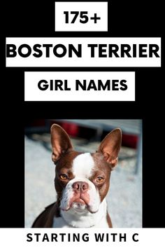 Baby Boston Terriers, Boston Terrier Names, Little Baby Girl, Little Babies, Names Starting With C, Puppy Names, Dogs Of The World, Dog Paws, Girl Names