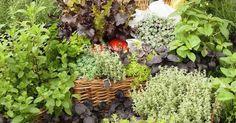 Te contamos cómo crear un vergel (en el jardín y en macetas) de aromáticas