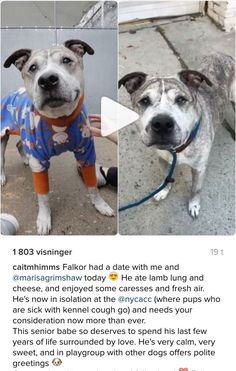 11/12/16 PLEASE GO MEET PRECIOUS FALKOR AT MANHATTAN CENTER NY THIS WEEKEND AND FALL IN LOVE❤️ HE NEEDS A ❤️ FOREVER ASAP❤️ HE'S CURRENT IN ISO AND NEEDS OUT OF THERE QUICKLY BEFORE THEY KILL HIM!!! /ij https://www.instagram.com/p/BMsGLRABp7v/