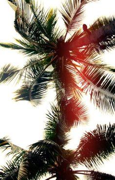 Palm tree life #fashiolista