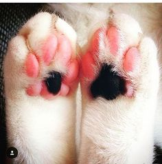 😻 Super cute paws👍 Thanks for Follow @CatsToday , more vids inside . 👇👇 TAG friends that Love Cats 😸 . Thanks @katzendame_alex for the pic 👍 Go @MostCats to watch other video of cute cats 👍😻 .