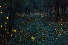 Natural Lights in Japan – Fubiz™