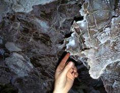 Wind Cave -- South Dakota