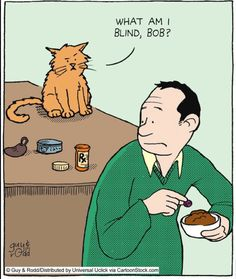 How do cats always know when you have put a pill in their food?