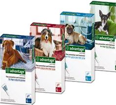 Best Tick Treatment For Dogs Uk