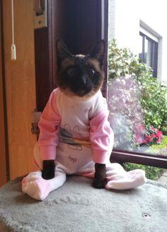 The Cat's pyjamas
