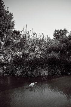 la-river-21-4-jpg Living In La, Jpg, River, Places, Image, Beautiful, Rivers, Lugares