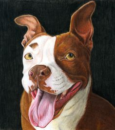 Winnie the Pit Bull by *rgyoung on deviantART
