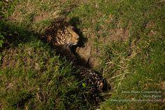 Mara Plains Kenya, Destinations, East Africa, Safari, Pictures, Animals, Photos, Animales, Animaux