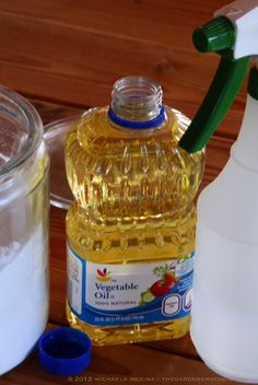 Home Remedy for Powdery Mildew