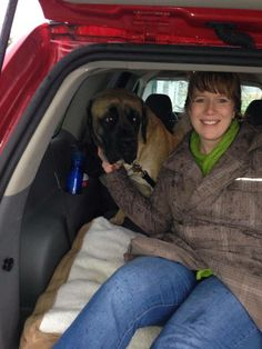 Today the gorgeous mastiff girl Ginger went to her forever home with Christina and the rest of the Lundberg family.  Ginger has come a long way in her time at NWBR, and while we did get a lot of great applications for her, when Christina told us about her big dog experience and the previous demeanor of their St. Bernard, we knew Ginger had found her family. We are very excited for this girl. Thank you Lundberg family for rescuing.