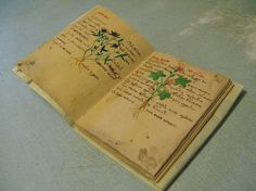 Herbarius n1
