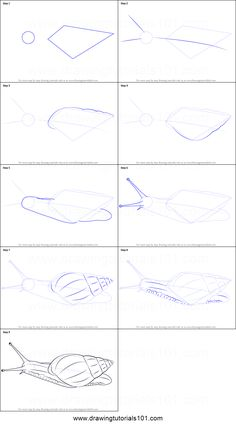 Giant African Snail is the specie of land snail. Its scientific name is Achatina fulica. In this tutorial, we will draw Giant African Snail.