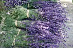 Lavender--New Mexico's climate is perfect for its very own French Lavender fields. This herb is a MUST at the wedding!
