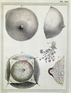 Anatomy of the breast from Manuel d'anatomie descriptive du corps humain by Jules Cloquet, 1825