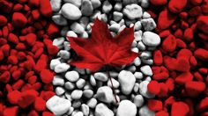 Canadian flag out of stones and pebbles and red maple leaf