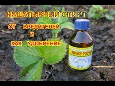 Нашатырный спирт- как удобрение и от вредителей клубники.  Ammonium alcohol as a fertilizer - YouTube