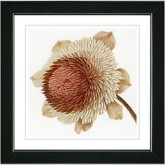Vintage Botanical No. 20cW by Zhee Singer Framed Giclee Print Fine Wall Art