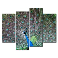 3 Piece Teal Wall Art Painting Peacock Courtship Print On Canvas The Picture Animal 4 5 Pictures Oil Prints For Home Decor(China (Mainland))