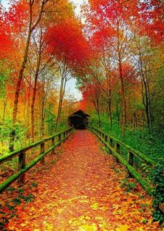 Covered bridge in fall. Love this; wish I were walking across this bridge right at this moment.                                                                                                                                                      More