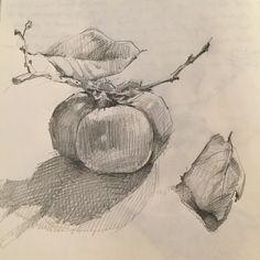 Persimmon #drawing #sketch #sketchbook #pencil by Sarah Sedwick. ©2015