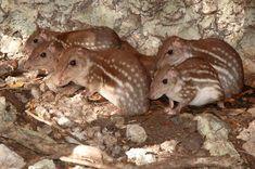 El paseo por el bosque - aqui el visitante podrá estar en pleno contacto con la naturaleza de la zona. http://aktun-chen.com
