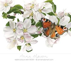 """Peacock Butterfly on Apple Blossom"" watercolor realism by Anna Mason Art Botanical Drawings, Botanical Illustration, Botanical Prints, Watercolor Illustration, Watercolor Artists, Watercolor Flowers, Watercolor Paintings, Watercolour, Flower Paintings"